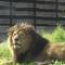 حديقة الحيوان بباريس