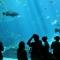 المتحف المائي في أنطاليا