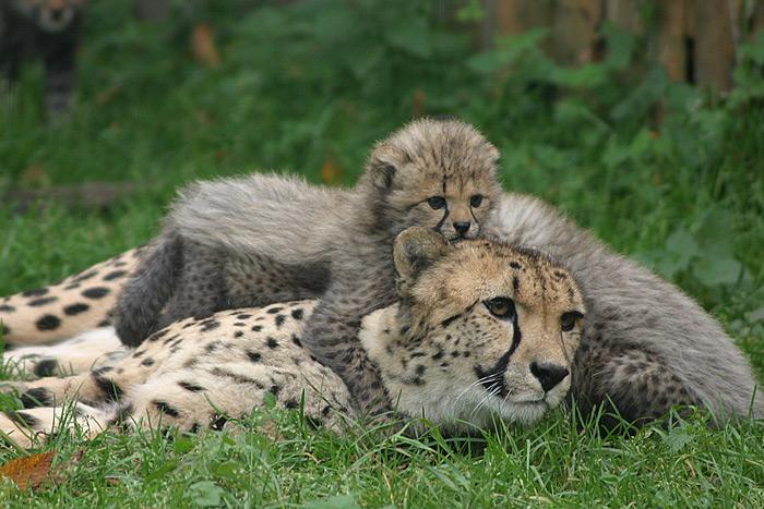 نتيجة بحث الصور عن حديقة الحيوانات في سالزبورغ