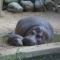 حديقة حيوان فرانكفورت