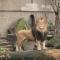 حديقة حيوان أرتيس